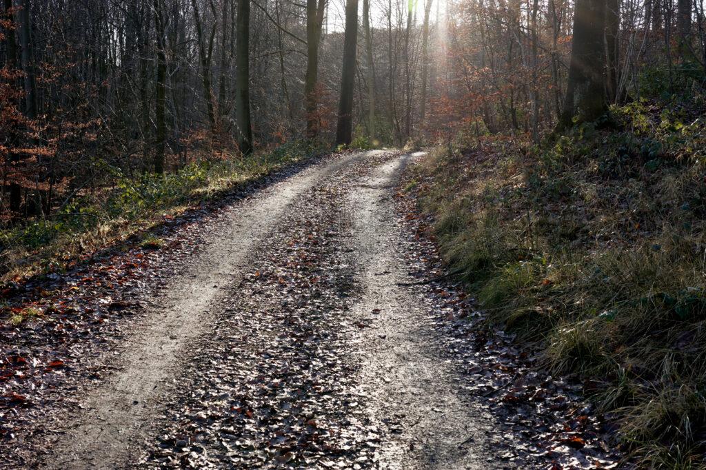 Walk & talk hos psykoterapeut Allan Fedders i Sønderborg